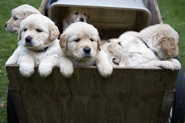 Puppy Wagon