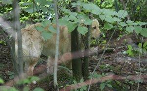 columbus in the woods