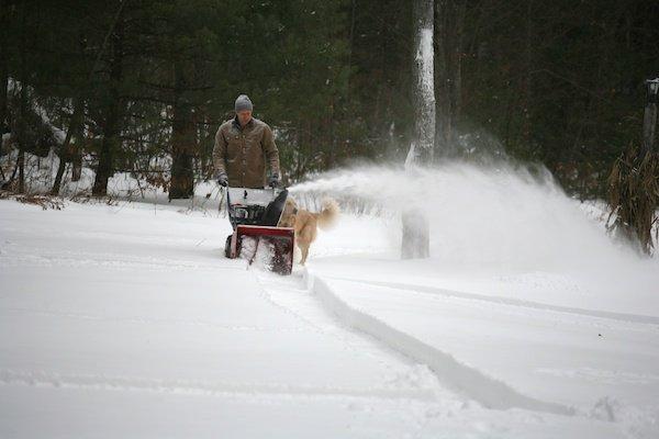 snowblowingdog (2)