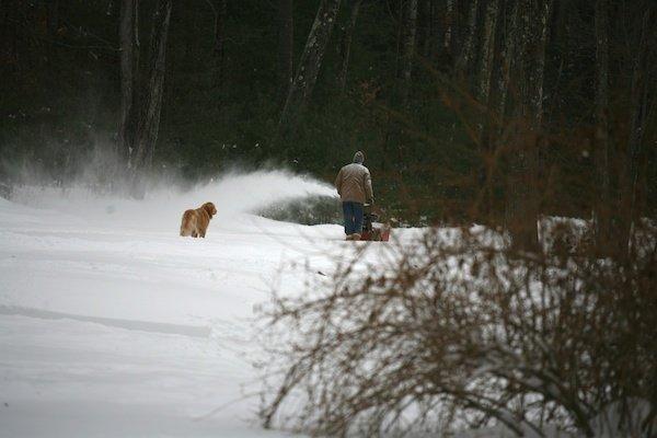 snowblowingdog (7)