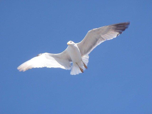 bird-203938_640